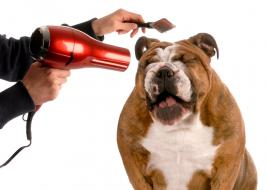 dog grooming business for sale
